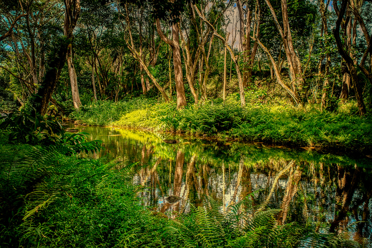 muliwai, landscape, panoramic, green, forest, hawaii, kauai, lorenzo mittiga, fine art photography