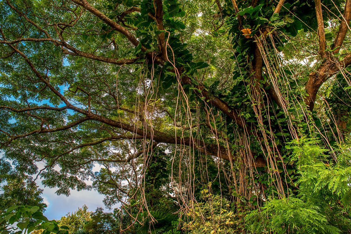 landscape, coast, green, forest, hawaii, kauai, lorenzo mittiga, fine art photography